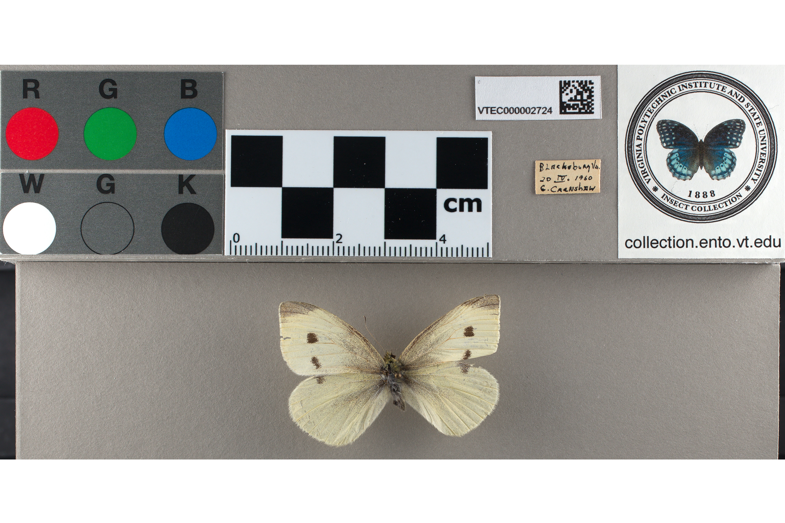Sample lab set with butterfly color grid and butterfly stamp
