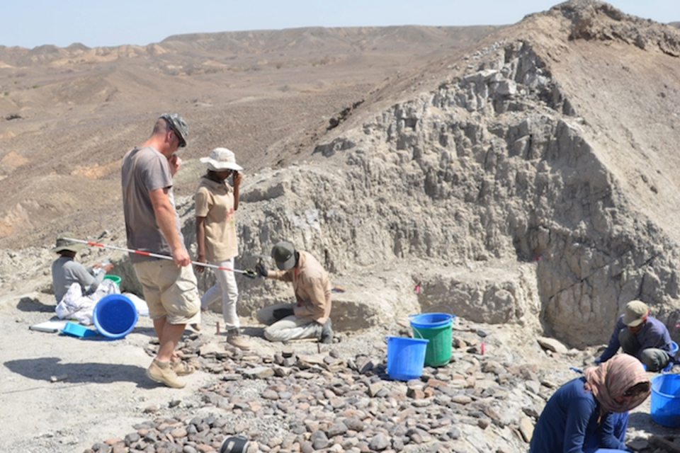 Archaeologists study the sediments at the Bokol Dora site. Stones were placed on the contact surface during the excavation to preserve the fragile stratigraphic contacts.