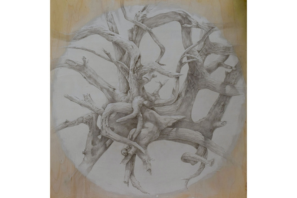 Drawing of tangled tree roots
